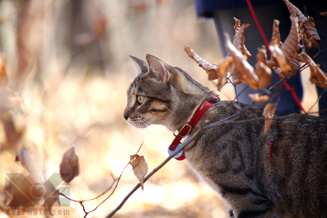 So here is our nearly grown-up kitty, being fierce in the forest. He's very dear to us, and I know that these photos will be very important to us.